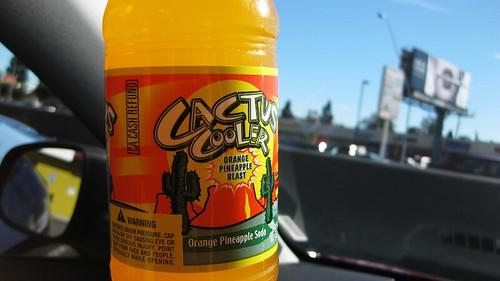 cactus cooler