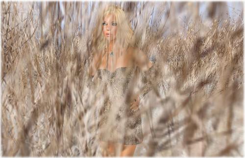 Wandering in Winter Wheat - Ocean Wade