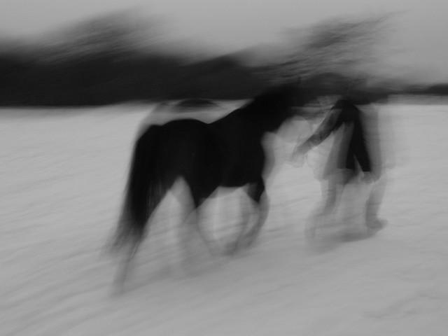 The Vanishing Horse