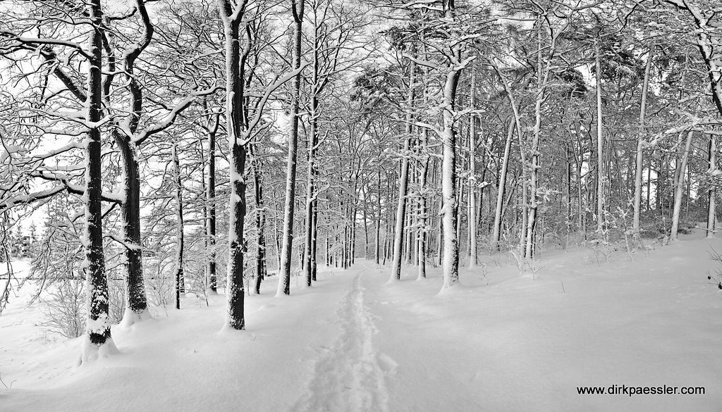 Winter 2010 - III