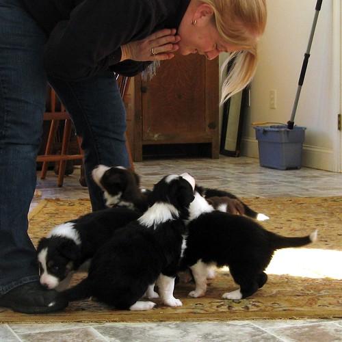1501 puppies follow D