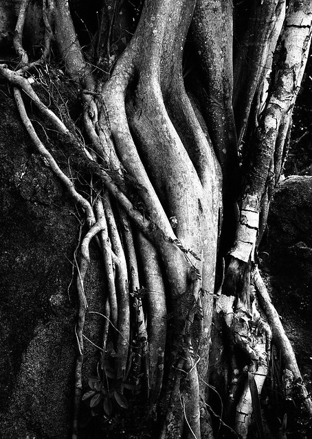 Roots on Rock 2