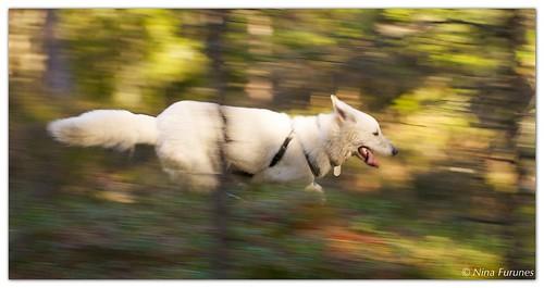 Running thru the woods