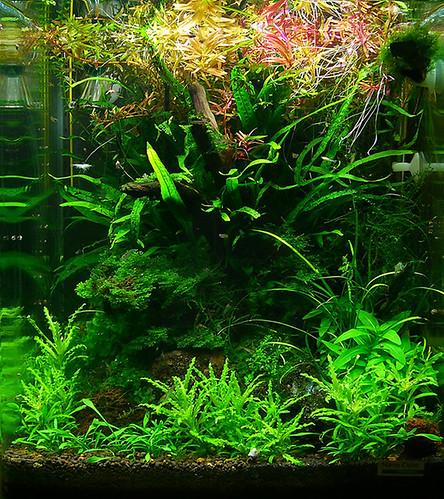 wassergarten julias aquarien blog seite 7. Black Bedroom Furniture Sets. Home Design Ideas
