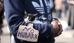 Revolutionary Pussy Cat in Tahrir Square
