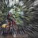 dirtbiking rider - zoom effect