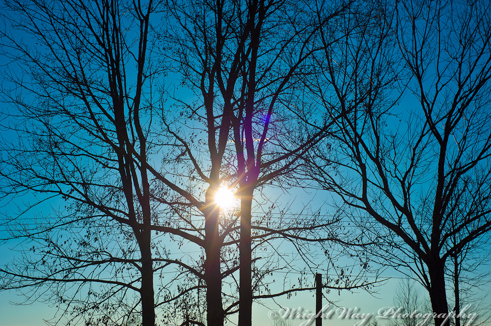 Sun though the Trees