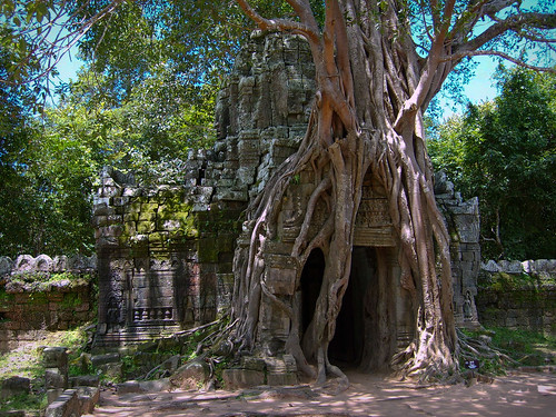 Angkor Trees