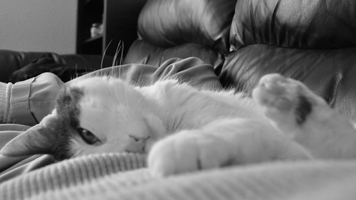2011.02.13 Aremid on me on couch bw 2