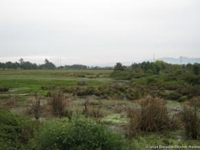 La Chucua de los Curies, Humedal Tibabuyes