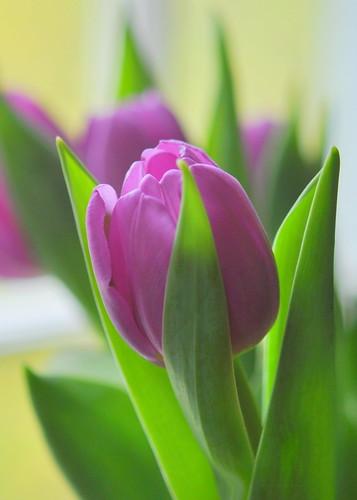 No winter lasts forever; no spring skips its turn.  ~Hal Borland