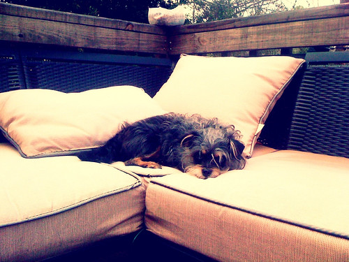 My dog enjoying his deck space. He sure does look comfy.