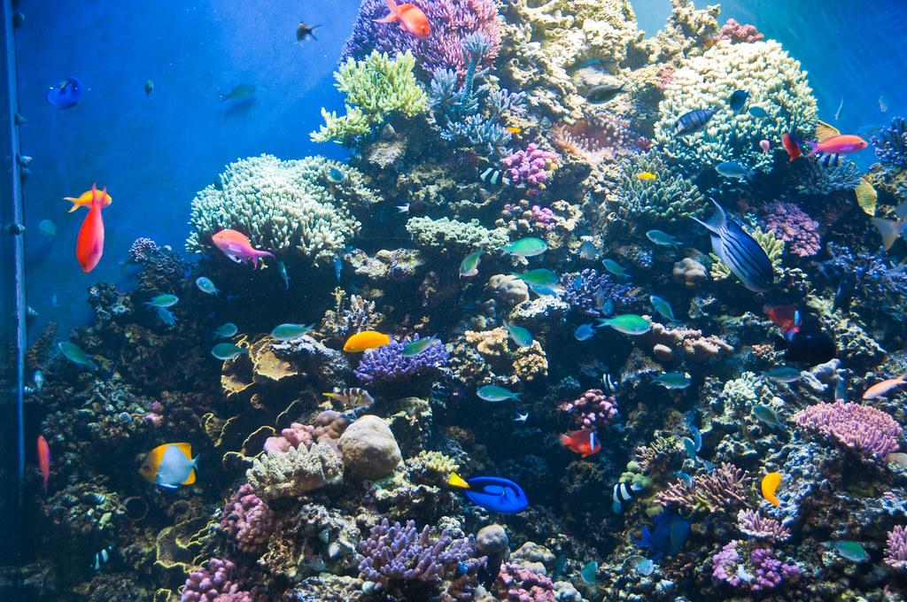 Coral reef display at Monterey Bay Aquarium