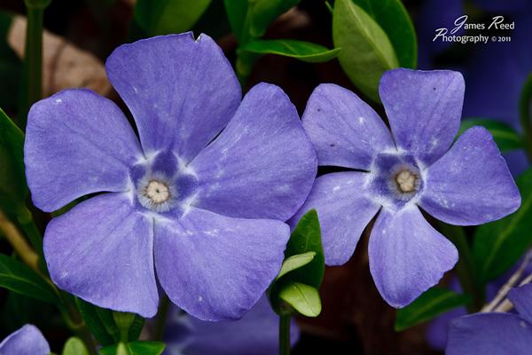 A set of pretty purple petals.