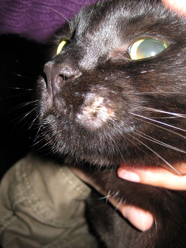 The Witch's Cats: Continuing Rodent Ulcer/Eosinophilic Granuloma