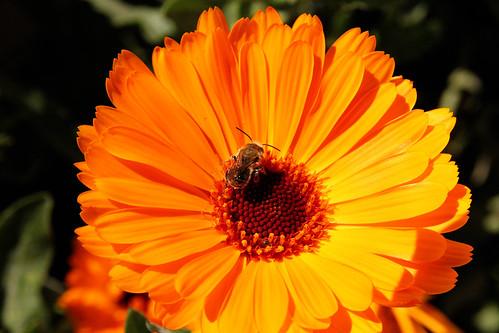 Flower-Bee