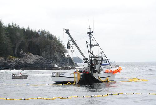 Pillar Bay, Setting Their Net