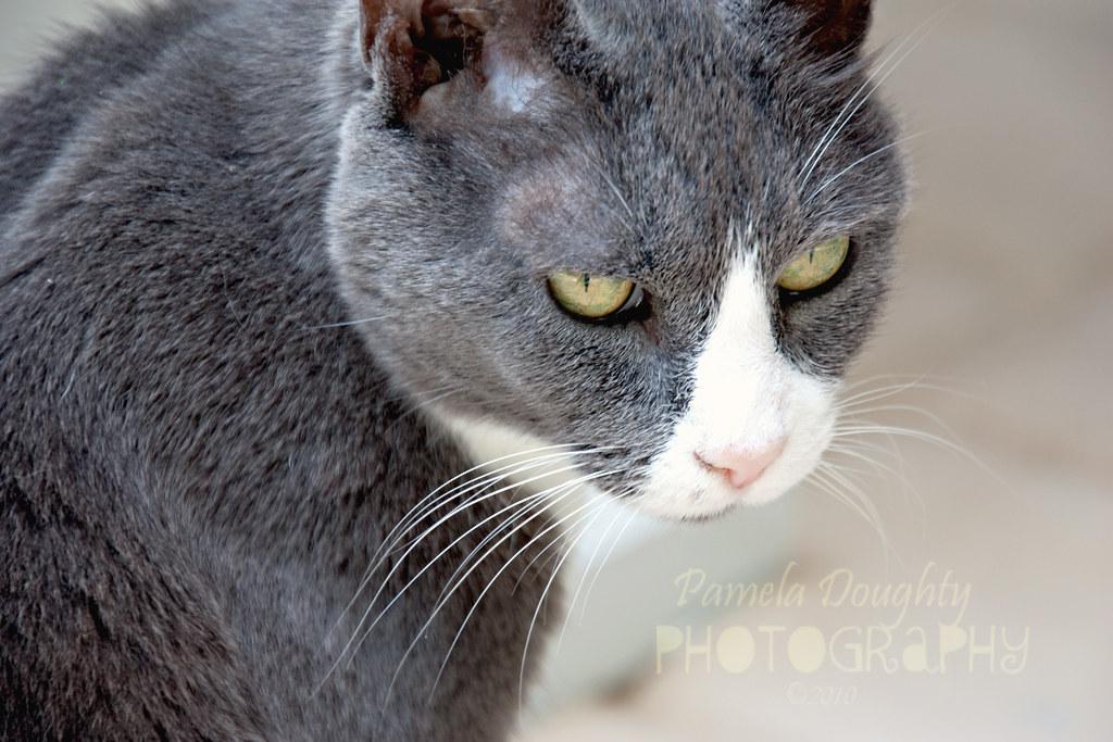 e_MG_3143 kitty3