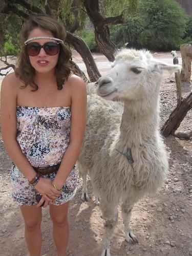 mawney llama