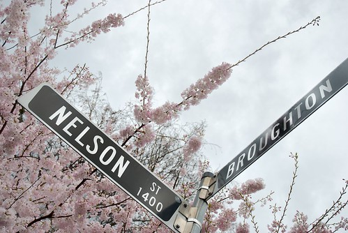 Vancouver Blossom 2 by timbarton