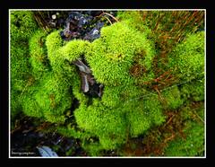 Foilage I n A Pacific Northwest Nature Refuge
