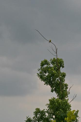 Exotischer Vogel am Wegrand