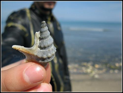 Riesci a sentire il rumore del mare?? by [Piccola_iena]