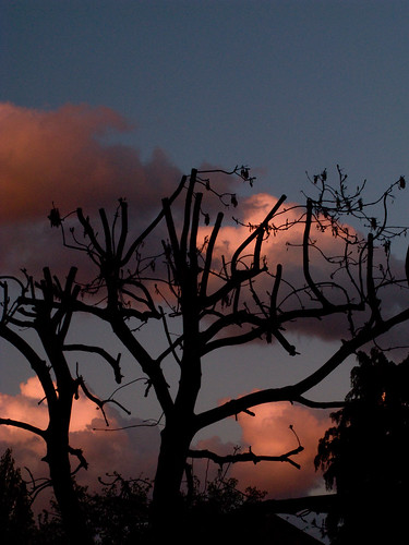 Sunset sky from my living room - the ash in the shade