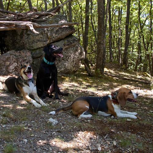 Randonnée canine à Valency