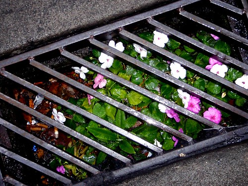 Grate Flowers