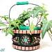 Emerald Bucket