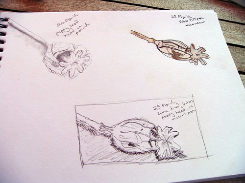 Sketching poppy heads