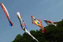 生田緑地の鯉のぼり(Ikuta Ryokuchi Park, Kawasaki, Kanagawa, Japan, 2011)