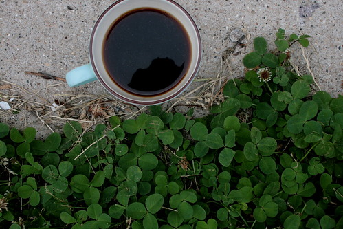 afternoon: coffee on clover