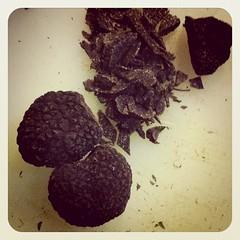 Black Edible Fungi