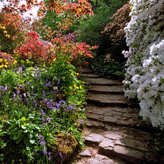 Scotney Castle Gardens, Kent, UK | Shaded step...