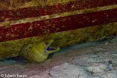Moray Eel on Night Dive