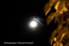 The moon lights the bush