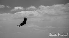 Silver shining wings
