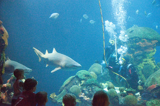 TN Aquairum shark tank also26