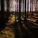 I skogen är vi alla små...