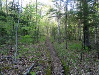 North Twin Trail Beginning