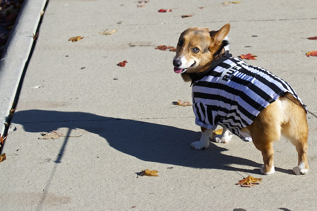 The World's Best Photos of halloween and referee