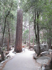 Yosemite National Park - California