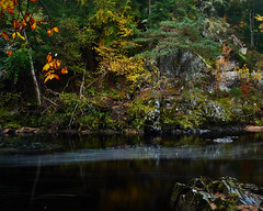 """A splash of Autumn, River Findhorn • <a style=""""font-size:0.8em;"""" href=""""http://www.flickr.com/photos/26440756@N06/30668350275/"""" target=""""_blank"""">View on Flickr</a>"""