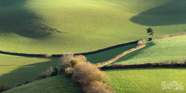 Hedge Rows