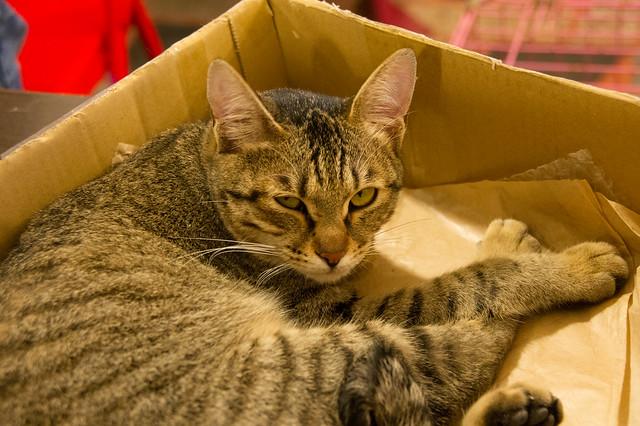三猫小舗(3 cat's shop)の猫