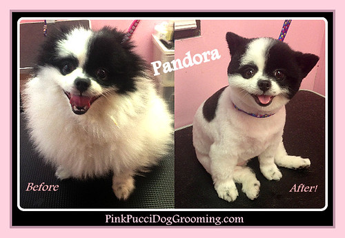 Flickriver Photoset Dog Grooming Before Amp After Gallery