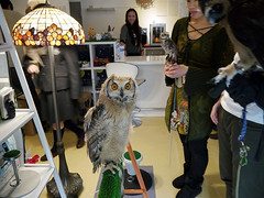 """Owl Cafe 8 • <a style=""""font-size:0.8em;"""" href=""""http://www.flickr.com/photos/66379360@N02/10588764565/"""" target=""""_blank"""">View on Flickr</a>"""