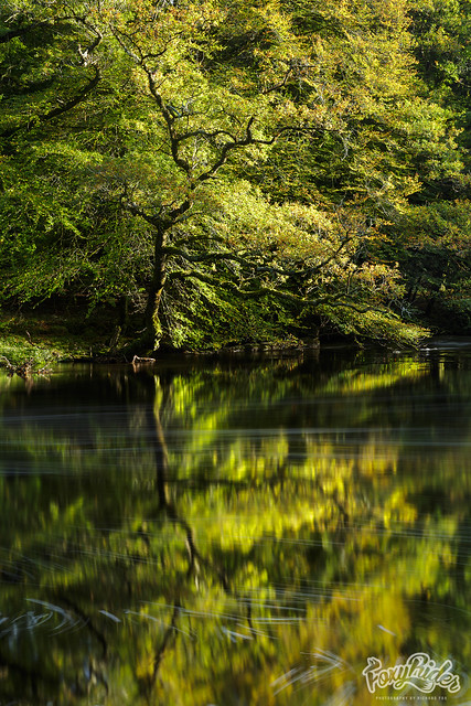 Hembury Reflections